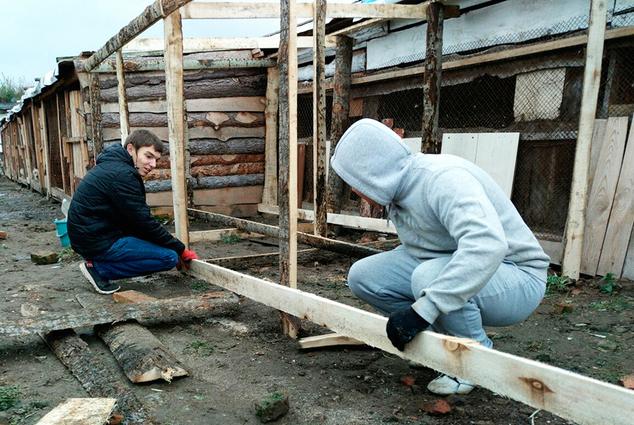 Добрые руки: какволонтёры ТУСУРа помогают приютам длябездомных животных