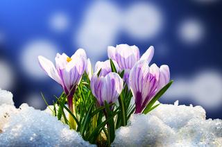 Ассоциация выпускников ТУСУРа поздравляет юбиляров марта