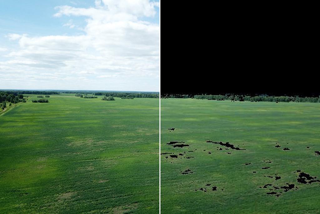 В ТУСУРе разрабатывают программу для анализа отклонений в развитии растений на сельскохозяйственных полях