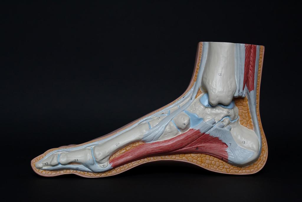 Технология, разработанная в ТУСУРе, поможет производителям ортопедической обуви