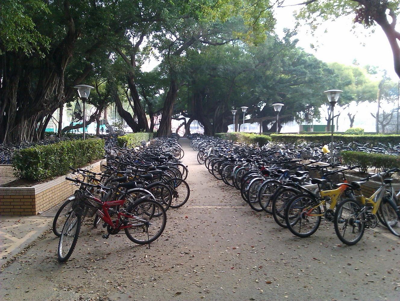 Велосипедная стоянка университетского кампуса