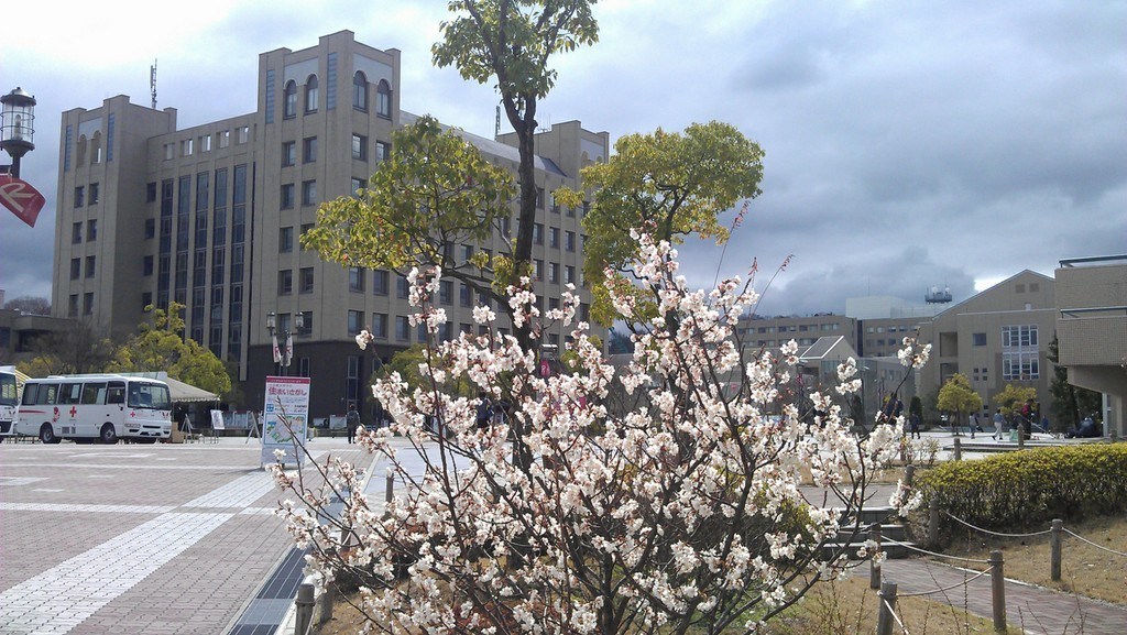 Кампус Университета Рицумейкан весной, первое цветение сакуры